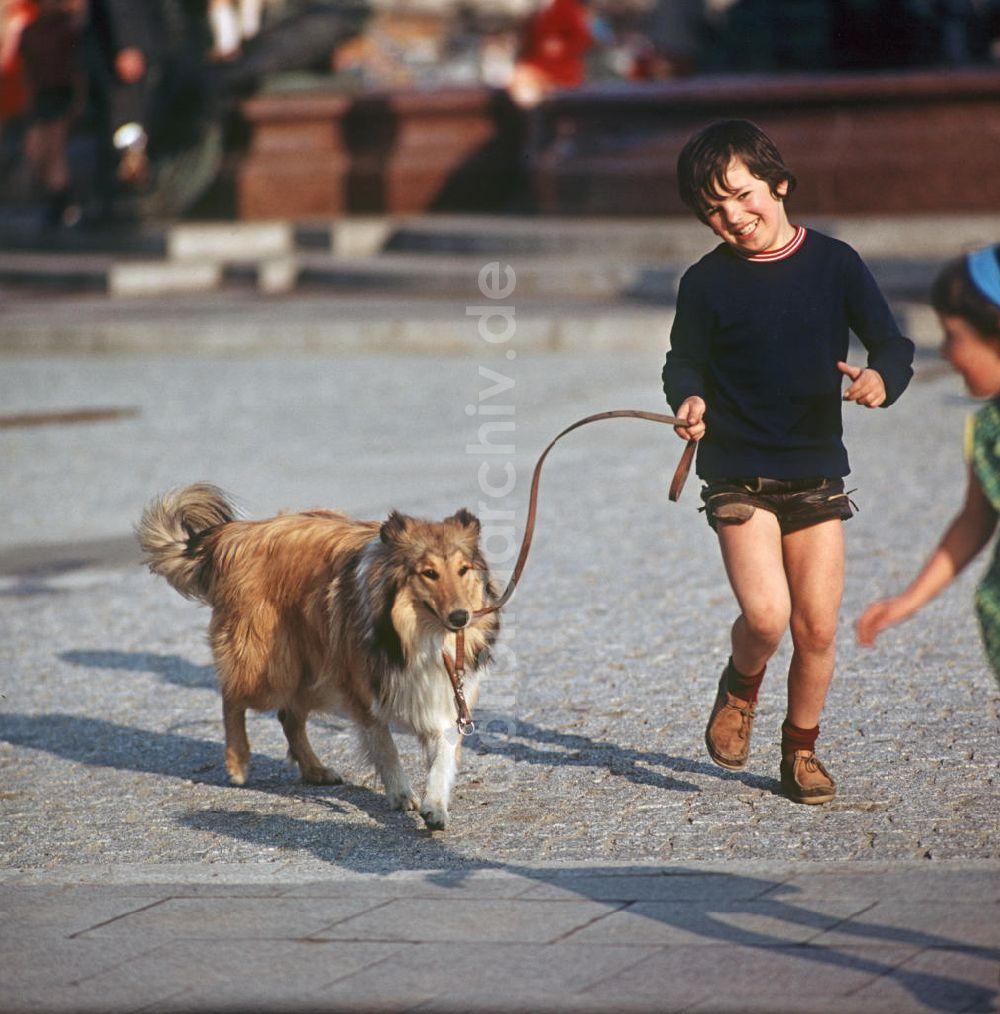 Berlin Hund Anmelden
